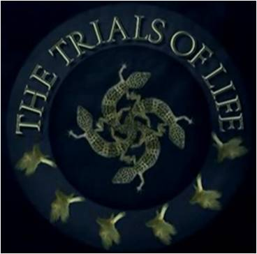 Image of The Trials of Life