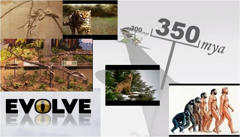 Image: Evolve (Documentary)